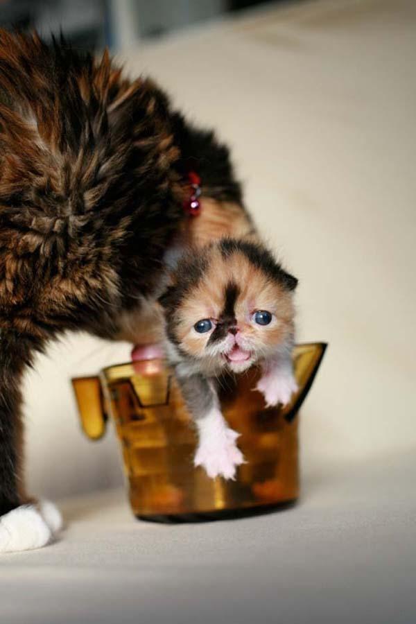 cute 73 Самые мимимишные зверушки из тех, что вы видели