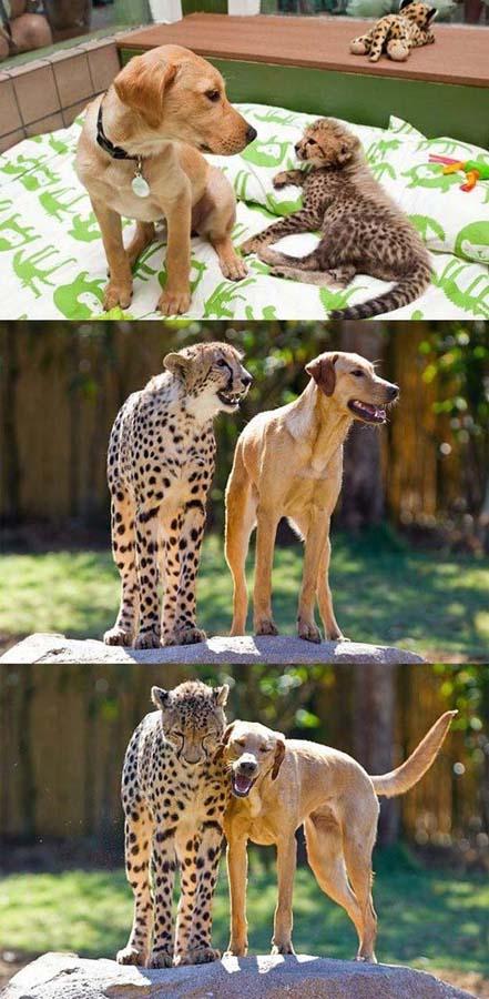 cute 80 Самые мимимишные зверушки из тех, что вы видели