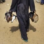Нигер – голод заставляет жителей продать последнего верблюда