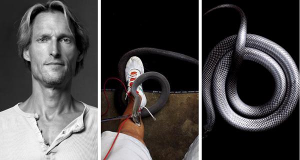 Невероятная красота ядовитых змей в фотопроекте МаркаЛайта