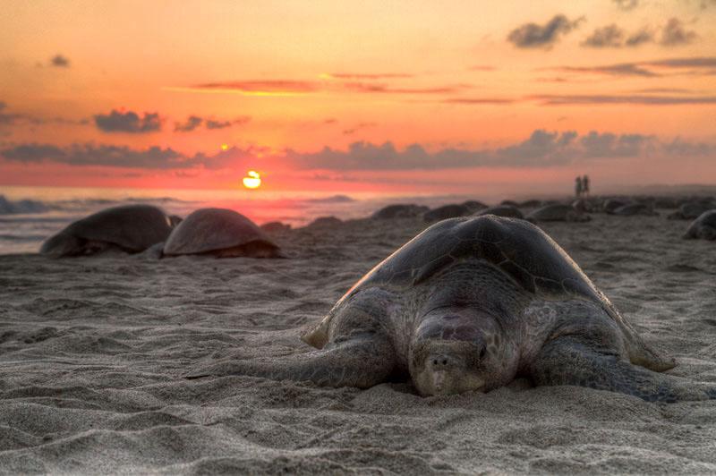 15 лучших фотографий Википедии за 2011 год