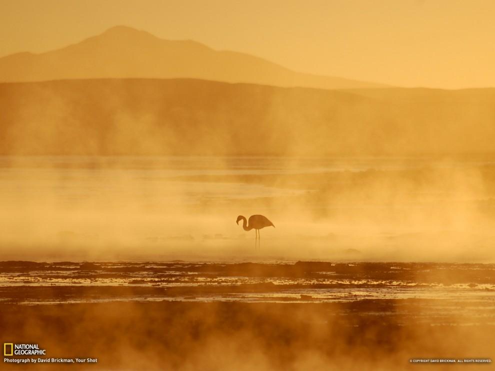 233 990x742 Обои для рабочего стола от National Geographic за август 2012