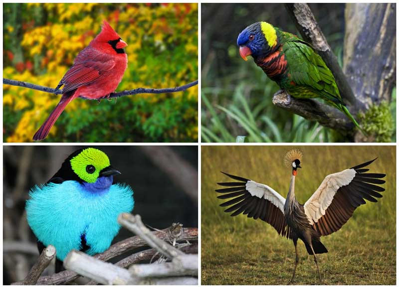 BIGPIC22 10 самых красивых птиц в мире