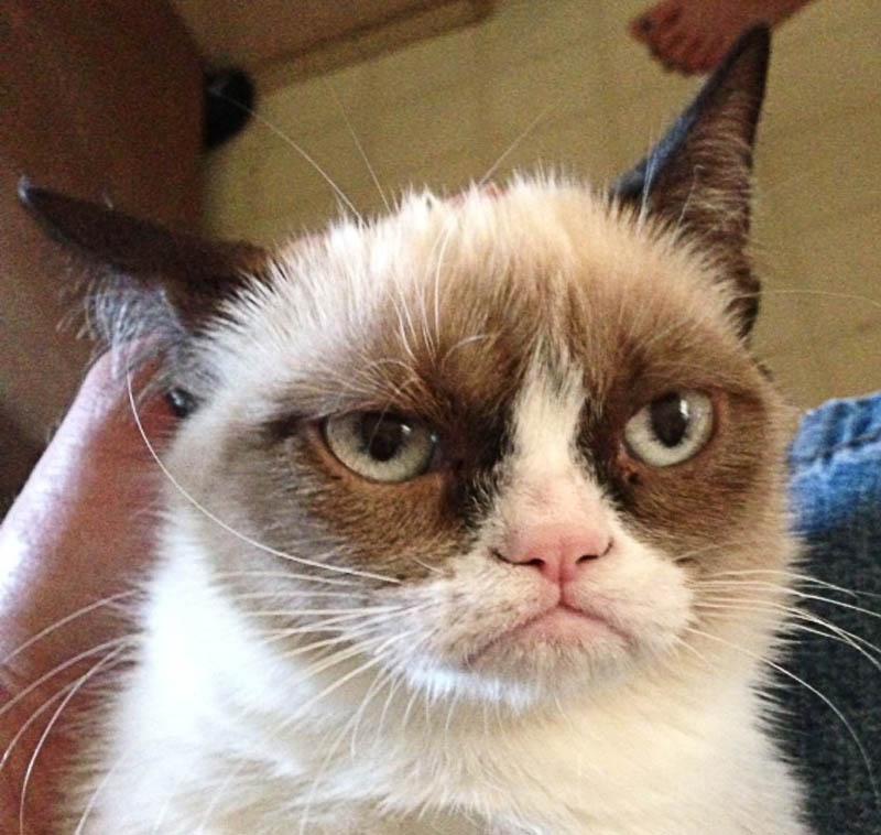 Самый сердитый кот Интернета