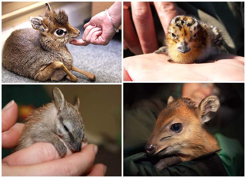 BIGPIC5 Умилительные экзотичные зверята малыши