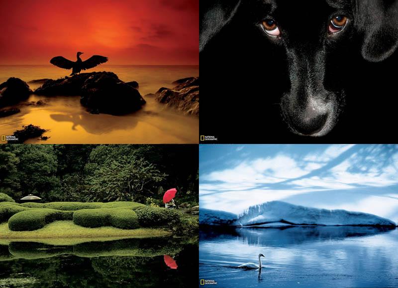 Фотошкола National Geographic: Использование цветовой палитры в снимках