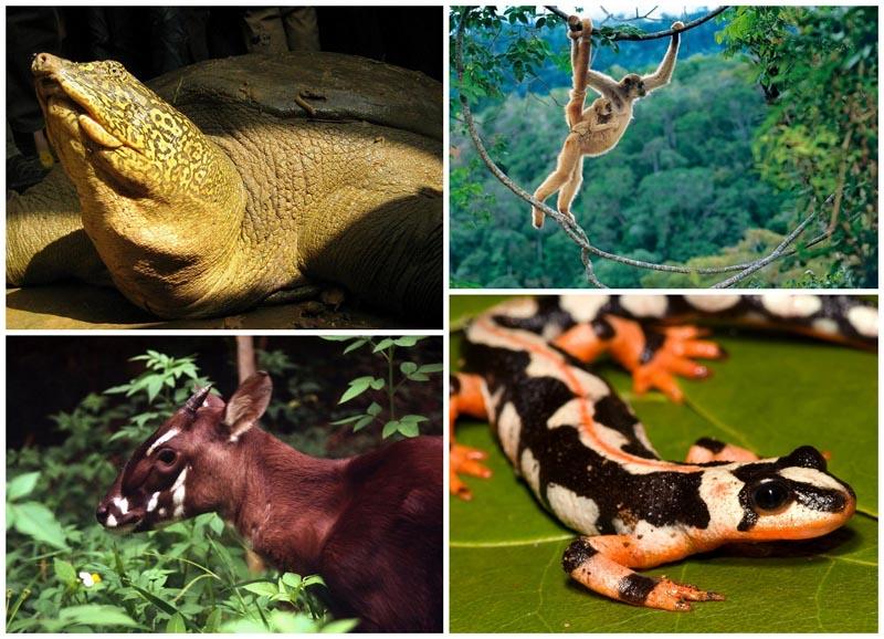BIGPIC55 Животные на грани вымирания