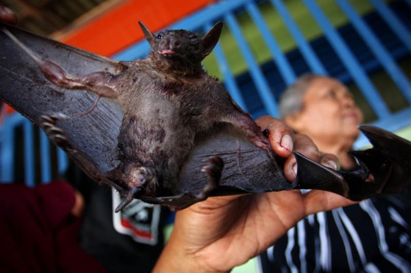 Поедая мясо летучих мышей