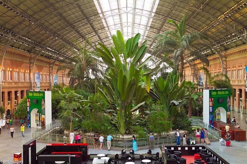 Botanical Garden 1 Ботанический сад на вокзале Аточа в Мадриде