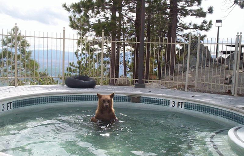 Chill Like A Bear 1 Учимся отдыхать, как медведи