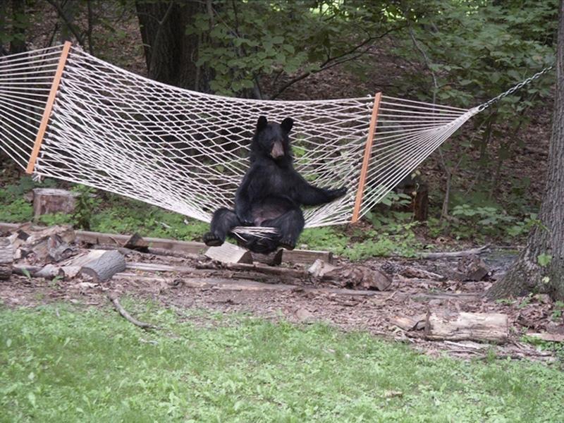 Chill Like A Bear 10 Учимся отдыхать, как медведи
