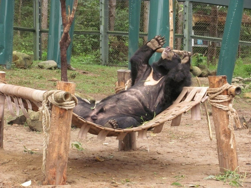 Chill Like A Bear 11 Учимся отдыхать, как медведи