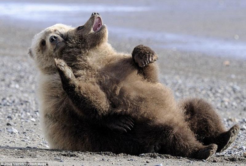 Chill Like A Bear 12 Учимся отдыхать, как медведи