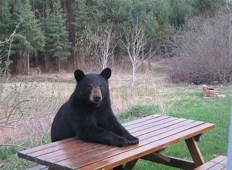 Chill Like A Bear 13 Учимся отдыхать, как медведи