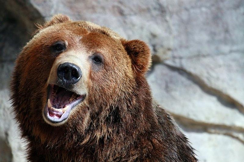 Chill Like A Bear 14 Учимся отдыхать, как медведи