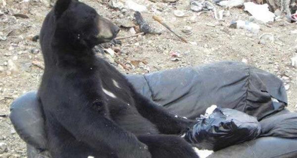 Учимся отдыхать, как медведи