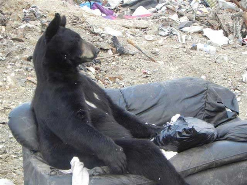 Chill Like A Bear 2 Учимся отдыхать, как медведи