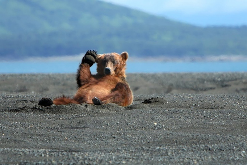 Chill Like A Bear 4 Учимся отдыхать, как медведи