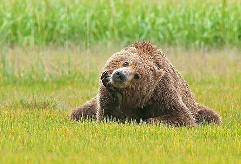 Chill Like A Bear 5 Учимся отдыхать, как медведи