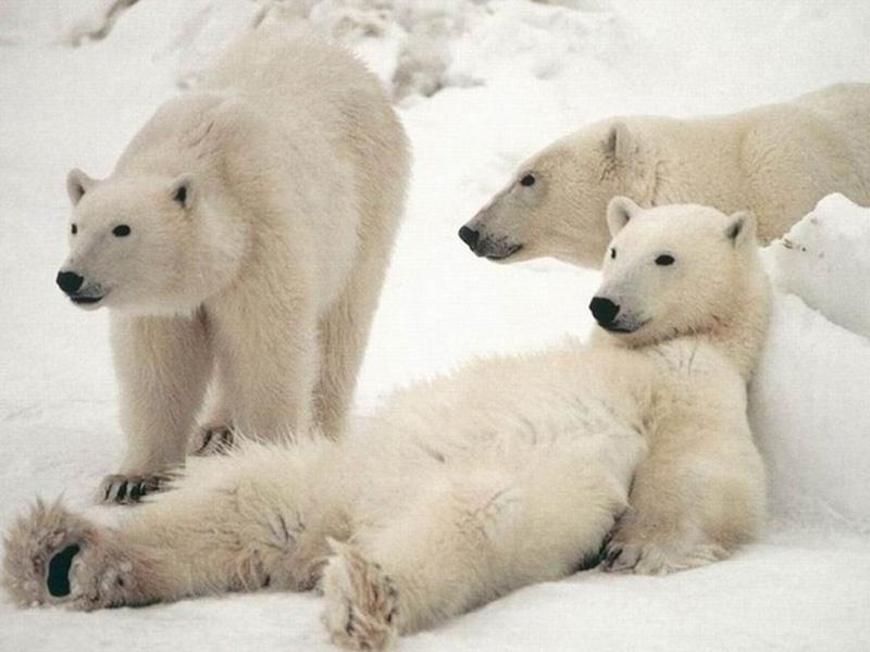 Chill Like A Bear 7 Учимся отдыхать, как медведи