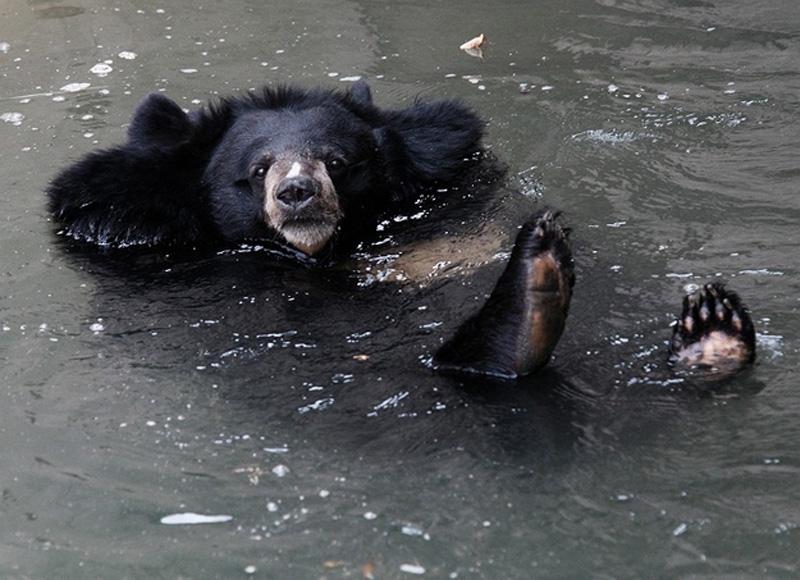 Chill Like A Bear 9 Учимся отдыхать, как медведи