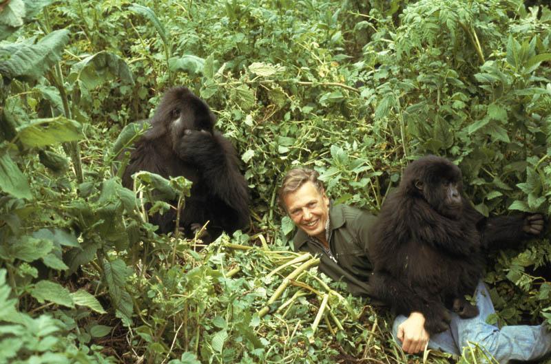 Дэвид Аттенборо — пионер документальных фильмов о природе