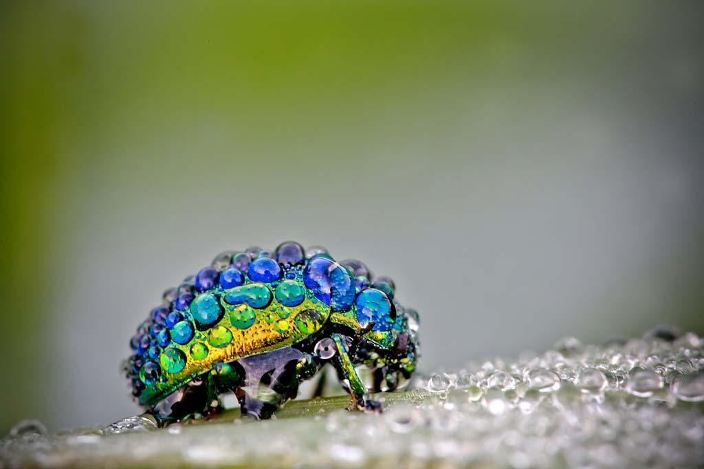 David Chambon 1 «Драгоценные» насекомые Давида Шамбона