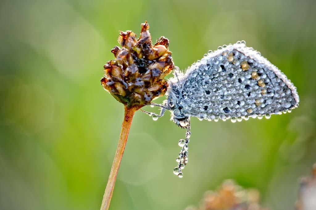 Драгоценные наряды насекомых, подаренные утренней росой, - в снимках Давида...