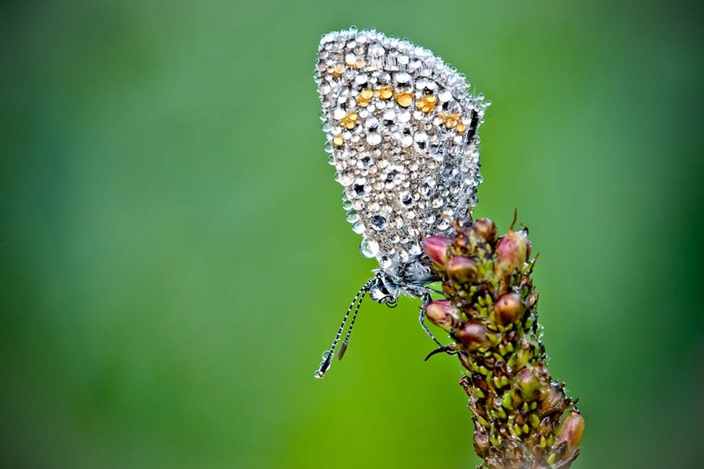 David Chambon 12 «Драгоценные» насекомые Давида Шамбона