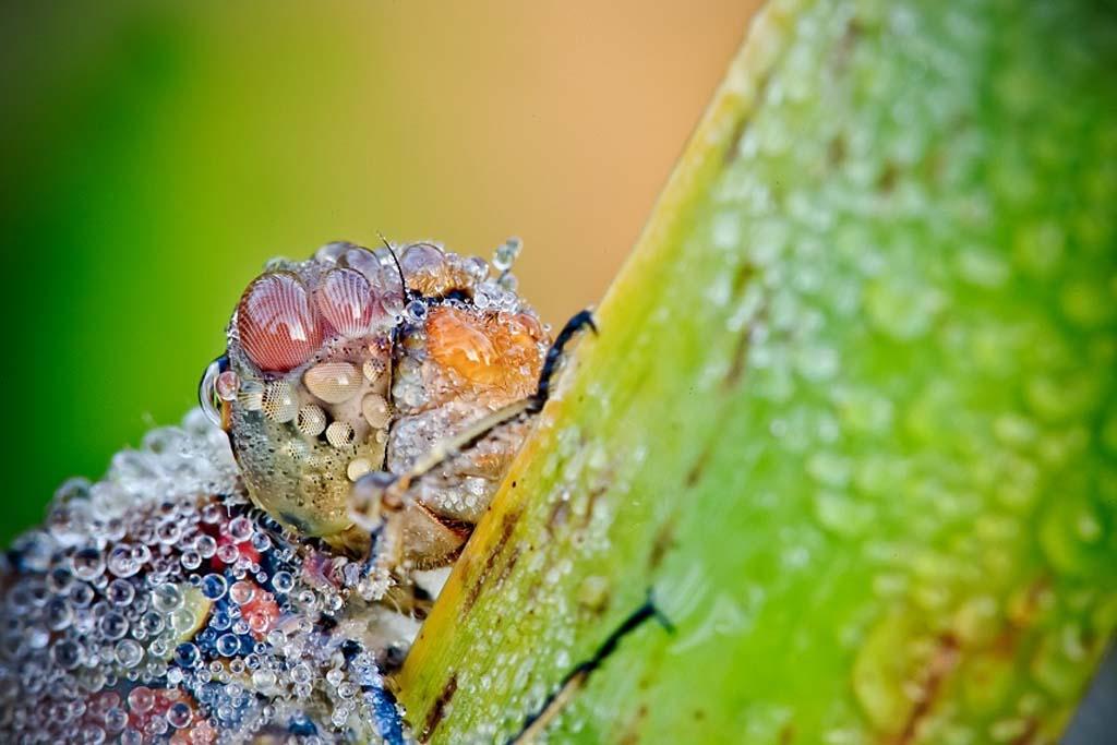 David Chambon 13 «Драгоценные» насекомые Давида Шамбона