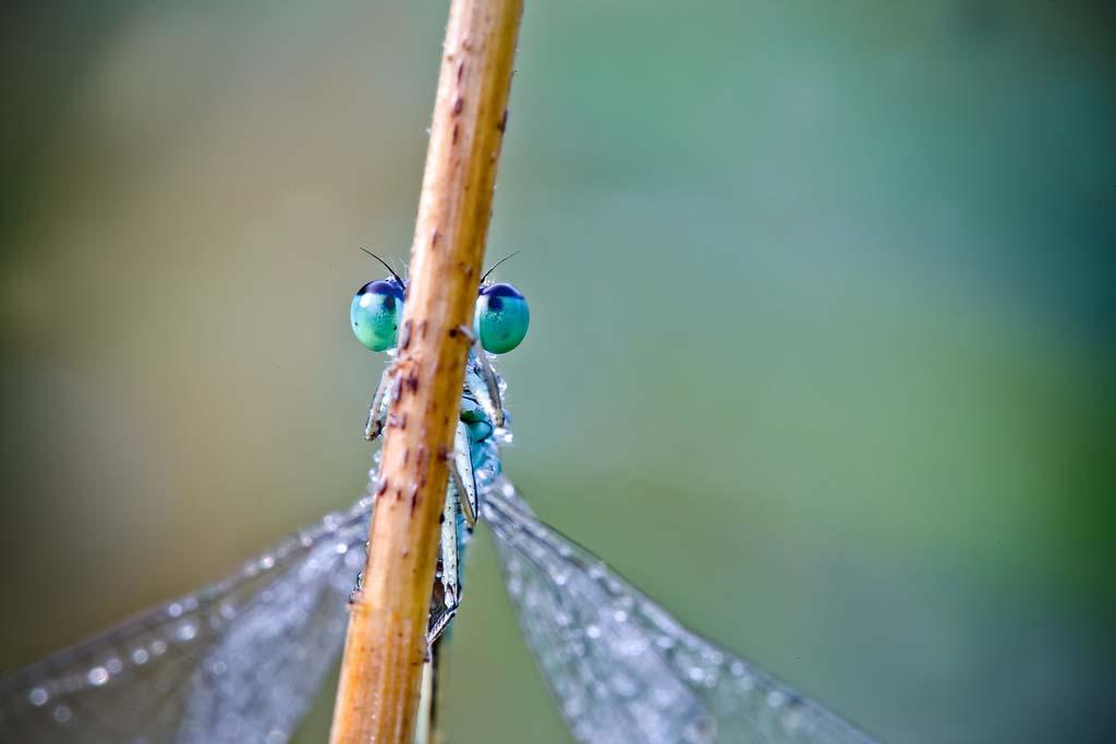 David Chambon 16 «Драгоценные» насекомые Давида Шамбона