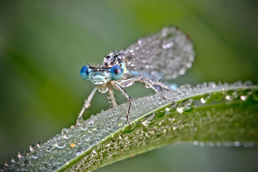 David Chambon 18 «Драгоценные» насекомые Давида Шамбона