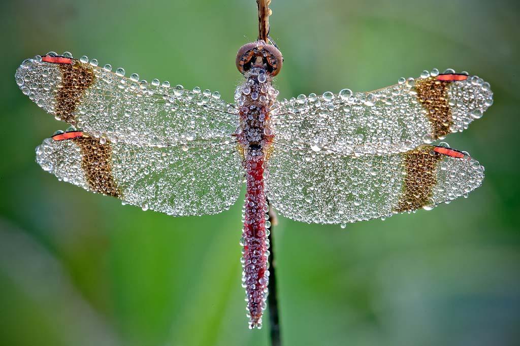 David Chambon 2 «Драгоценные» насекомые Давида Шамбона