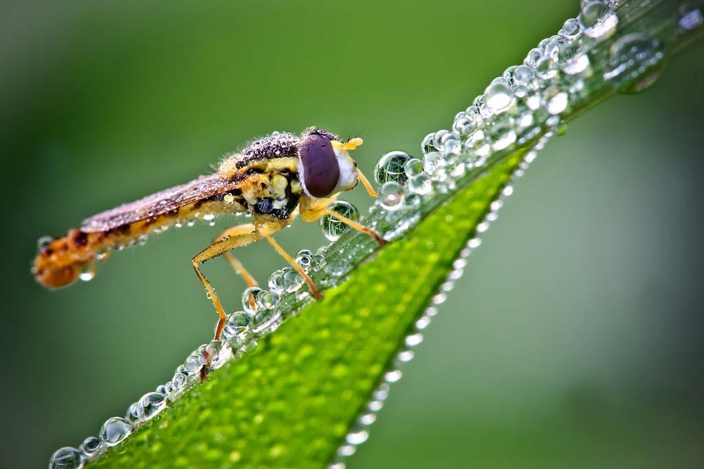 David Chambon 22 «Драгоценные» насекомые Давида Шамбона