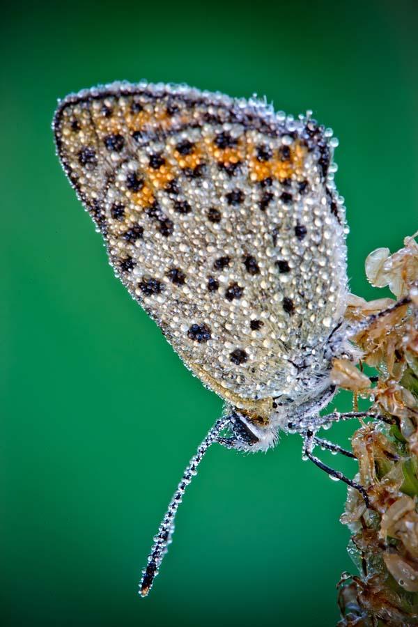 David Chambon 23 «Драгоценные» насекомые Давида Шамбона