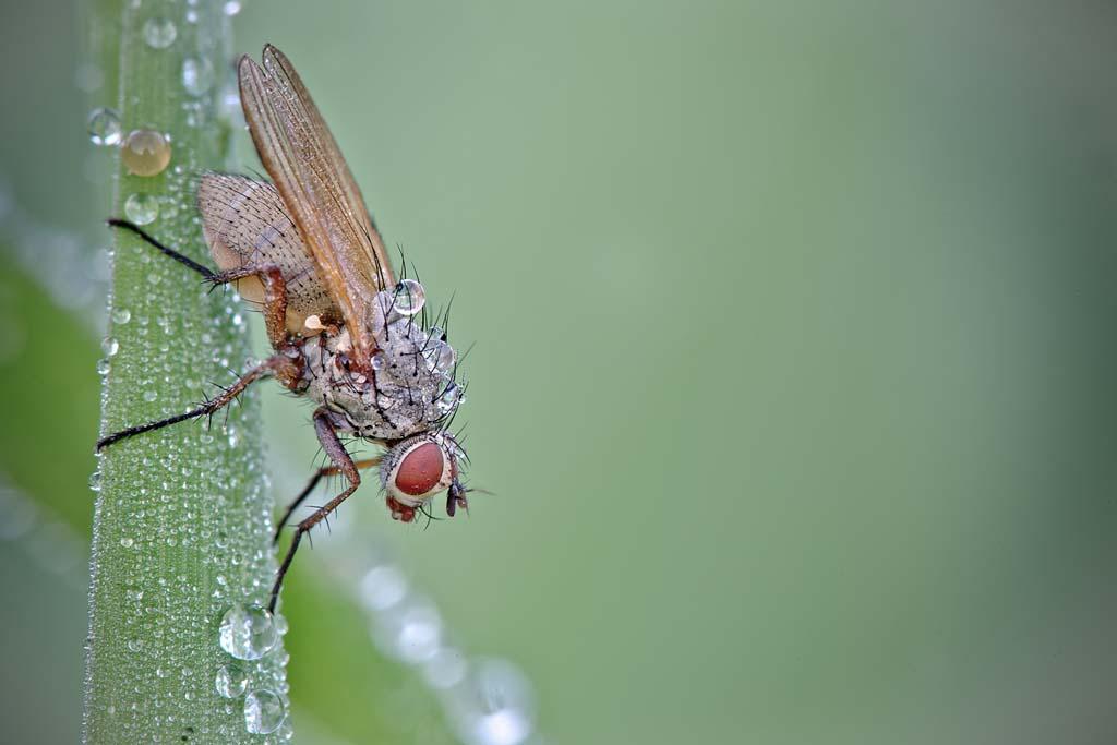 David Chambon 24 «Драгоценные» насекомые Давида Шамбона