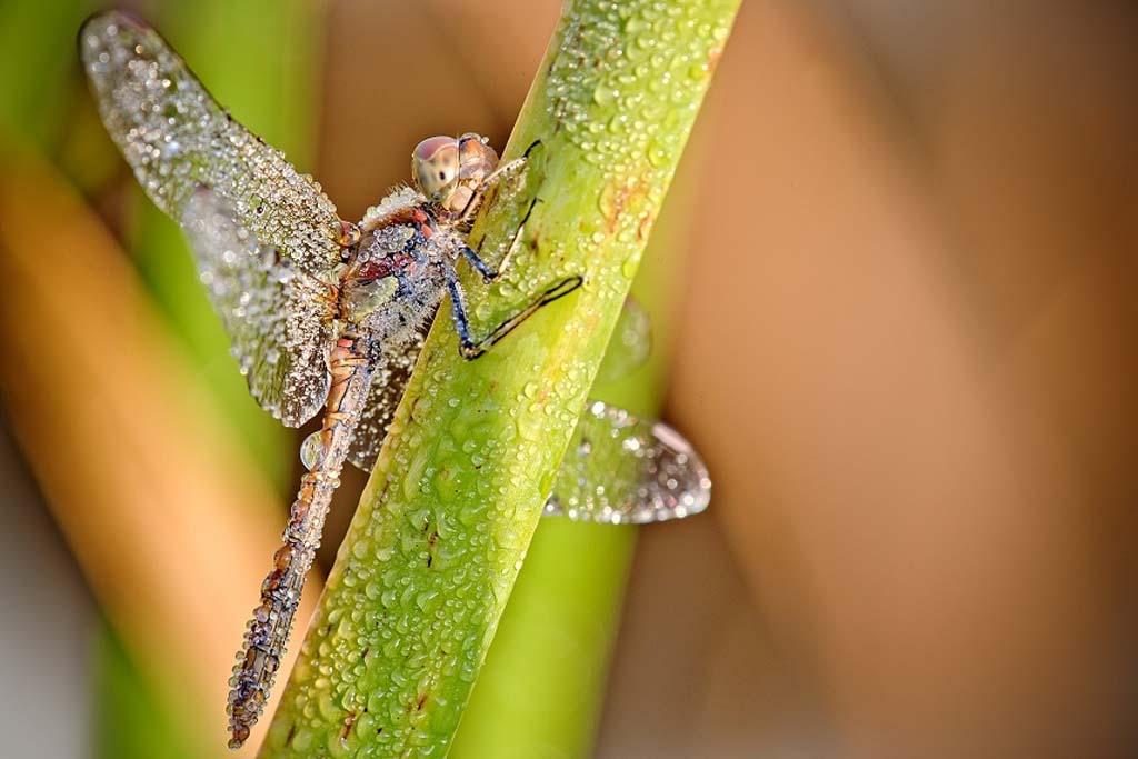 David Chambon 3 «Драгоценные» насекомые Давида Шамбона