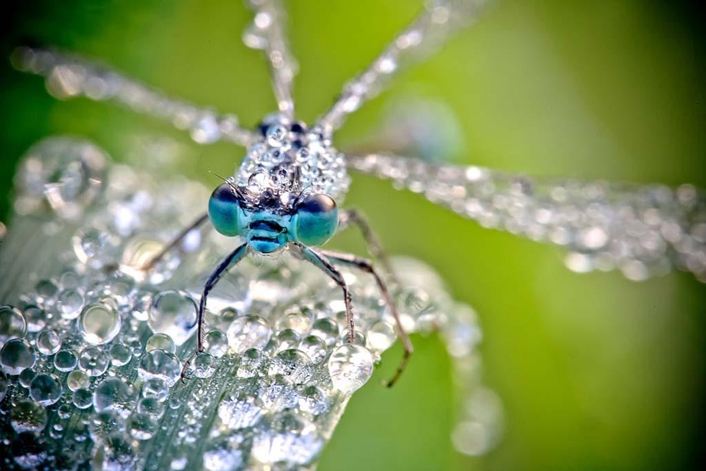 David Chambon 5 «Драгоценные» насекомые Давида Шамбона
