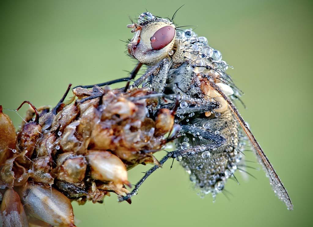 David Chambon 8 «Драгоценные» насекомые Давида Шамбона