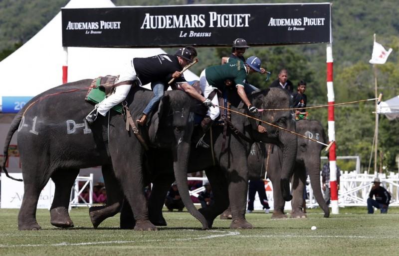 Поло на слонах за Кубок Короля