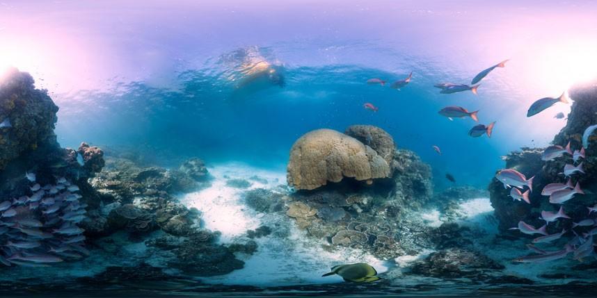 Explore coral reefs 1 Коралловые рифы в фотографиях