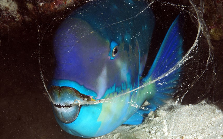 Explore coral reefs 11 Коралловые рифы в фотографиях