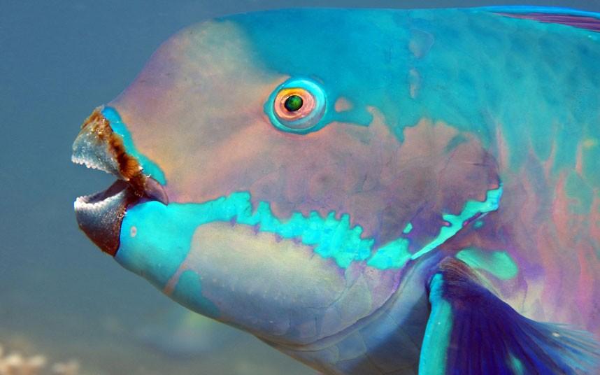 Explore coral reefs 12 Коралловые рифы в фотографиях