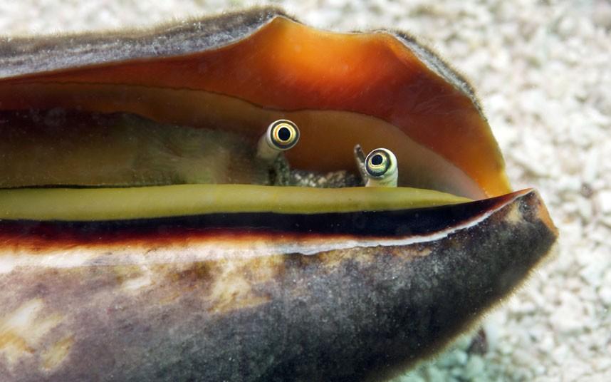 Explore coral reefs 13 Коралловые рифы в фотографиях