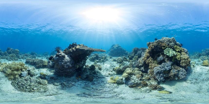 Explore coral reefs 16 Коралловые рифы в фотографиях
