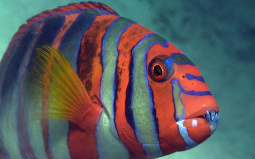 Explore coral reefs 19 Коралловые рифы в фотографиях