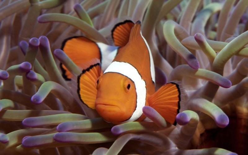 Коралловые рифы в фотографиях