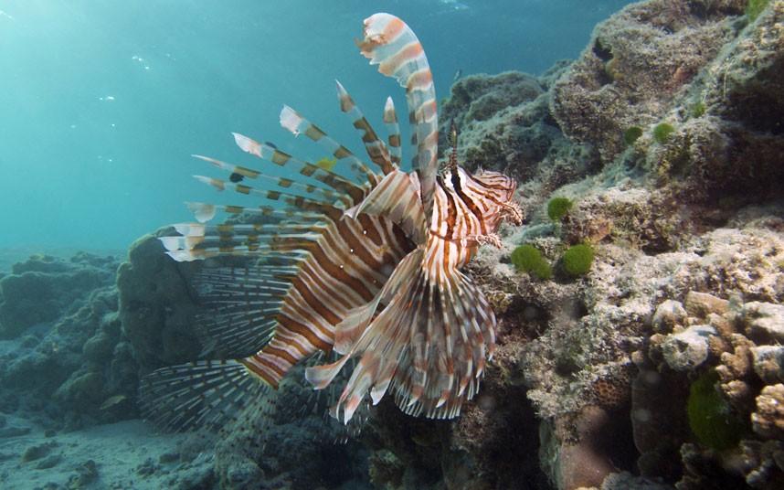 Explore coral reefs 20 Коралловые рифы в фотографиях