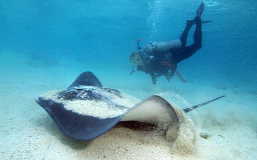 Explore coral reefs 21 Коралловые рифы в фотографиях