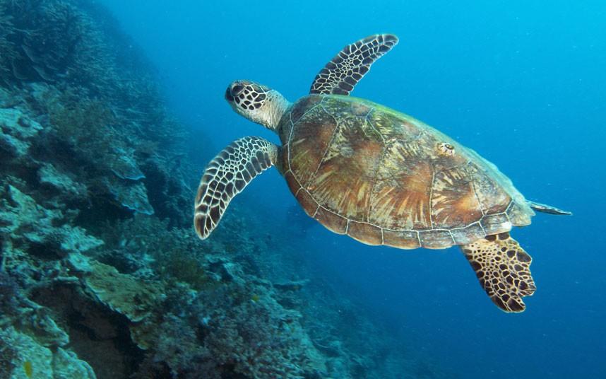 Explore coral reefs 24 Коралловые рифы в фотографиях